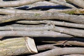 IGPR: Infracţiunile din domeniul silvic, cu 63% mai multe faţă de perioada similară a lui 2020