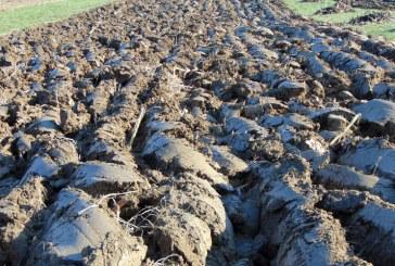 Comisia Europeană: România utilizează doar 2,4% din terenuri pentru agricultura ecologică
