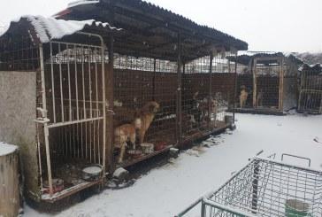 Târgu Lăpuș: 12 câini ținuți în captivitate în condiții improprii, ridicați de polițiști