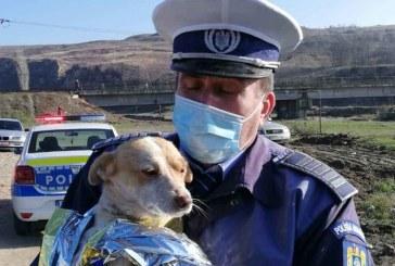 Și la Maramureș e concurență mare pentru posturile de polițiști la Protecția Animalelor