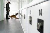 Câini antrenați special vor detecta călătorii cu COVID-19 pe Aeroportul din Sibiu
