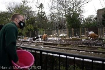 Din cauza lockdown-ului, viitorul Grădinii Zoologice din Londra este în pericol