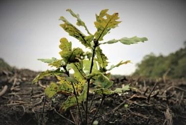 Romsilva va planta circa 20 milioane de puieţi forestieri în campania de împăduriri de primăvară