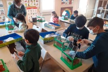 """Proiectul """"Școala din grădină"""" aduce speranța unui stil de viață mai sănătos în comunitățile defavorizate Sătmărel din Satu Mare și Pirita din Baia Mare"""