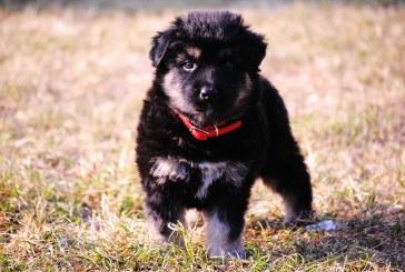 SCHIMBĂRI – Ce obligații legale ai dacă ești proprietar de animal de companie