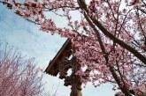 Imaginea zilei: Secvențe de primăvară maramureșeană