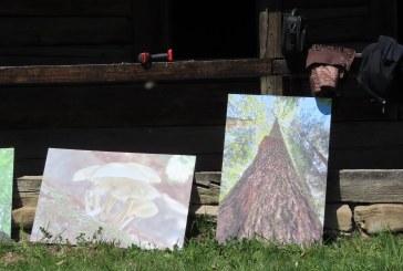 EXPOZIȚIE – Codrii Seculari de la Strâmbu Băiuț, pădurile de aur ale Maramureșului
