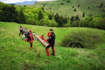 BUDEȘTI – Un om a murit strivit de un copac