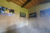 ÎN SIGHET – Fotografii inedite cu animalele pădurilor din Maramureș