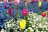 În 2020, municipalitatea băimăreană a produs peste 706.000 flori