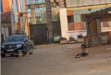 BAIA MARE -24 de câini fără stăpân ridicați de pe străzi în 7 zile