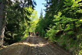 Salvamontiștii maramureșeni au curățat și reabilitat traseele din munții Țibleș