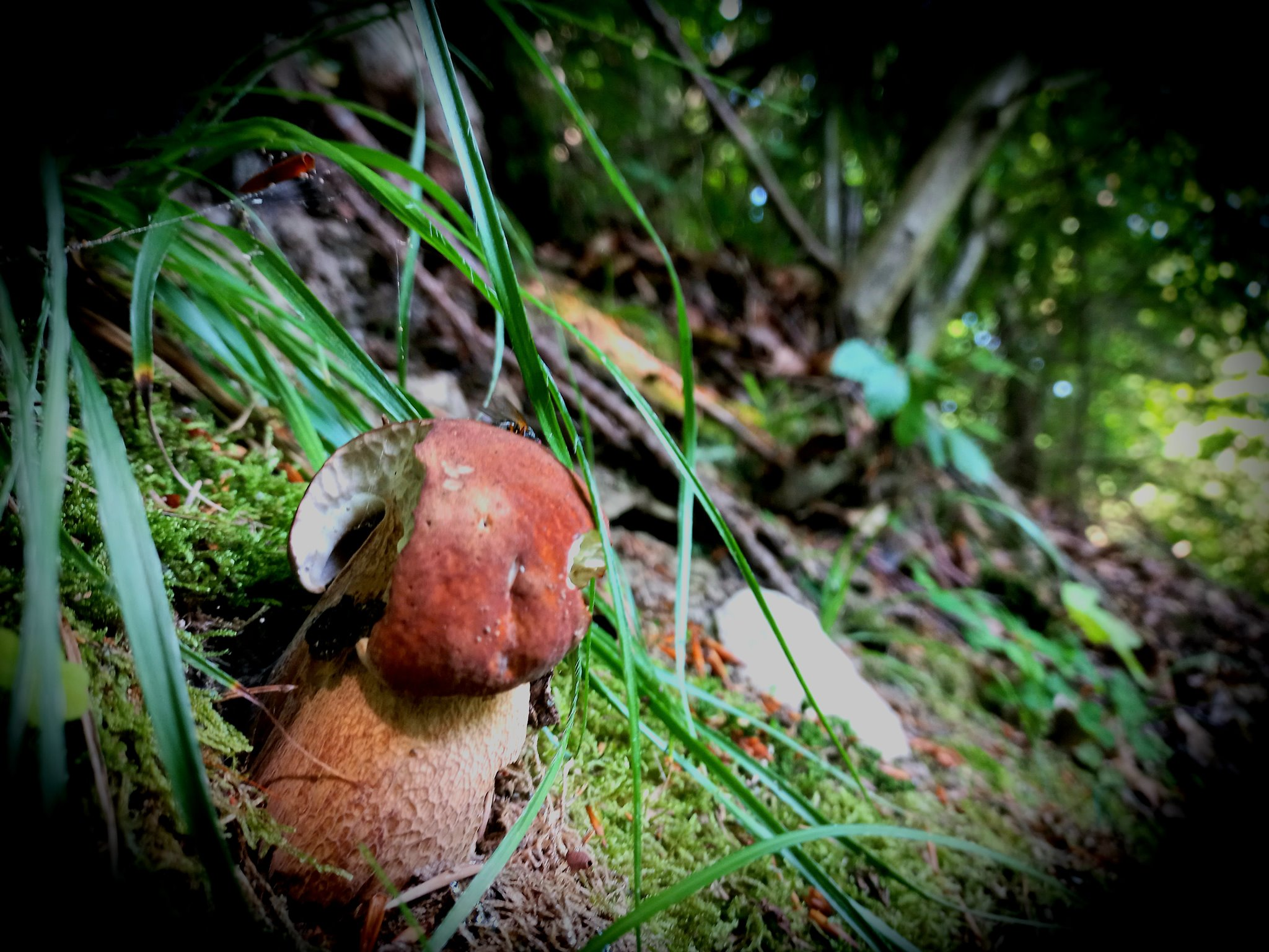ciuperci maramures 2021)