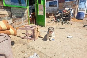 SPARGERE ADĂPOST BAIA MARE – Rând pe rând câinii furați sunt găsiți printre romi