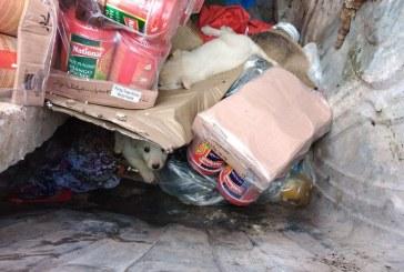 BAIA MARE – Cinci căței salvați din tomberonul de gunoi