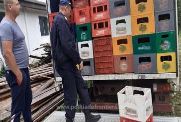 REALITATE – Lemn ascuns după bere confiscat de polițiștii de frontieră la Borșa