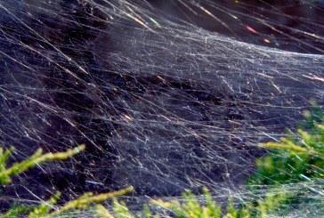 Imaginea zilei: Pânză de păianjen