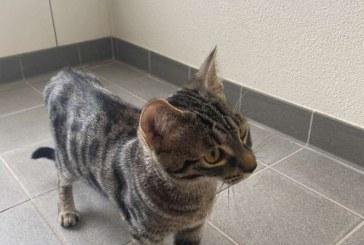 Un francez care avea o urgenţă medicală a fost salvat de pisică şi de vecini
