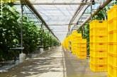 AGRICULTURĂ – 100 de milioane de euro pentru construirea de sere și solarii