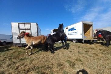 INEDIT – Expoziție de cai la Remetea Chioarului