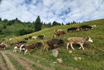 BANI EUROPENI – Controale la fermierii din Maramureș