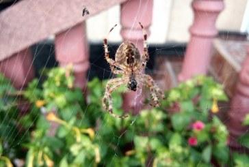 Imaginea zilei: Un păianjen