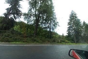 PE HUTA ȘI HERA – Se taie arborii care pun în pericol circulația publică