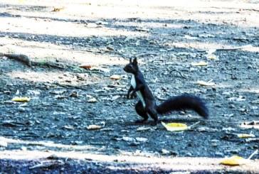 Imaginea zilei: Veveriță în parcul municipal din Baia Mare