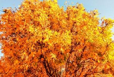 Imaginea zilei: Culori de toamnă în Baia Mare