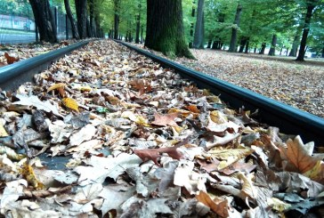 Imaginea zilei: Toamnă în Parcul Municipal Baia Mare