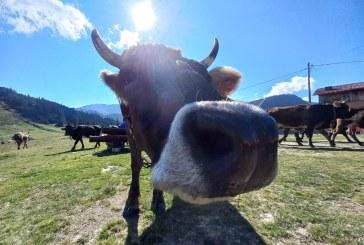 REALITATE – Scăderea efectivelor de animale afectează și munca veterinarilor din județ